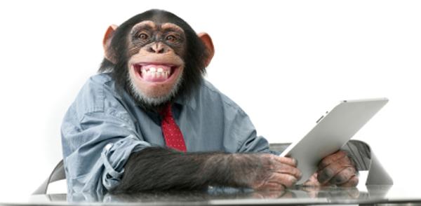 Cheeky social monkey